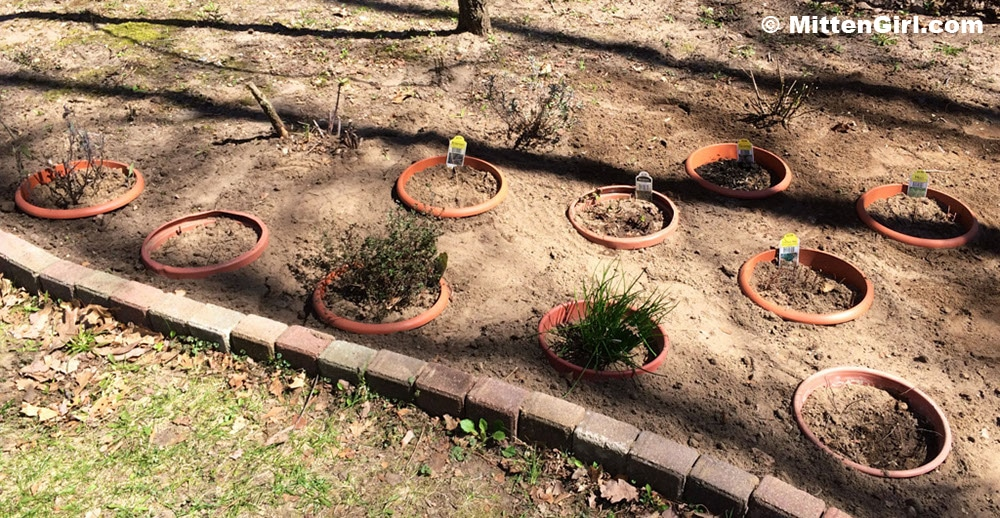 All of the pots are in the ground