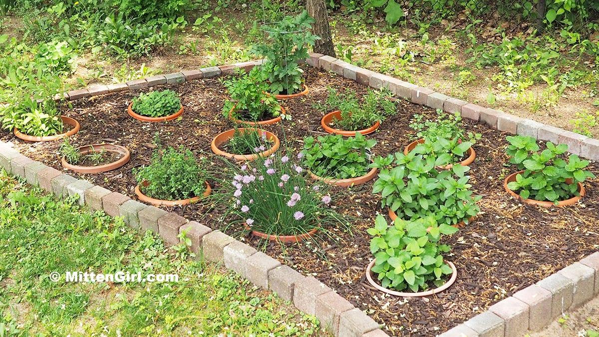My backyard herb garden